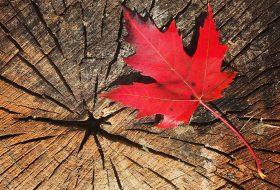 Entreprise au Canada, 10 conseils clés pour bien démarrer